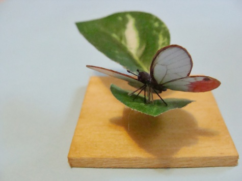 motýlci