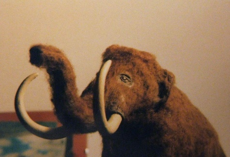 Mamut (Mammuthus primigenius)