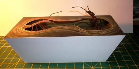 Mraveniště