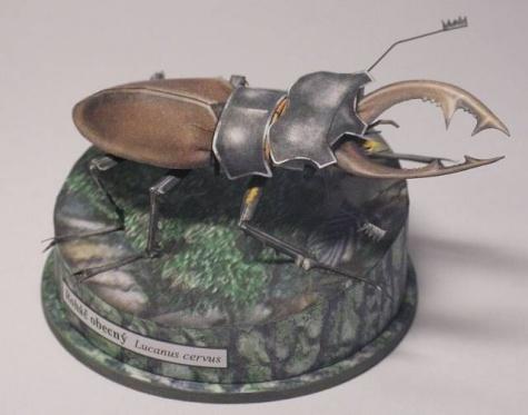 Naši hmyzí velikáni