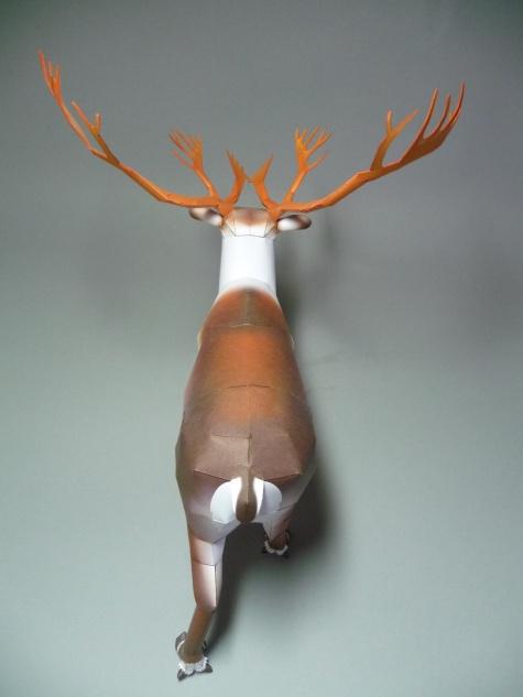 Reindeer - Sob