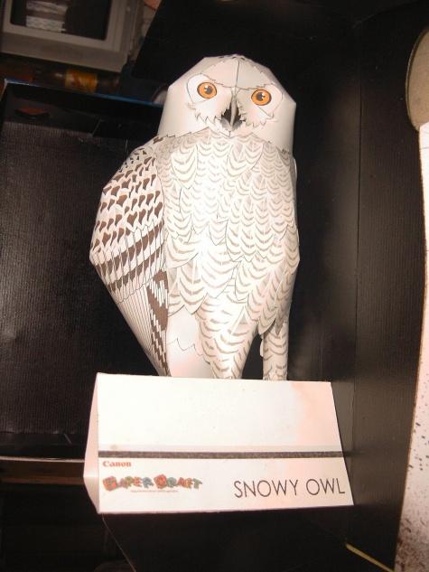 Snežná sova 1