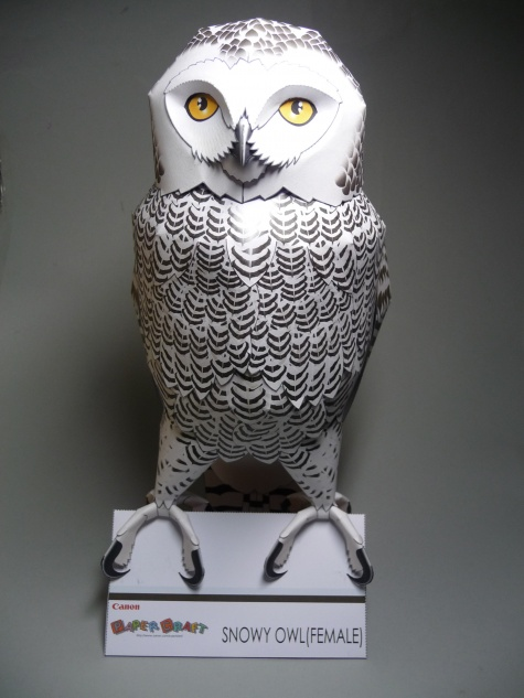 Snowy Owl - Sněžná sova
